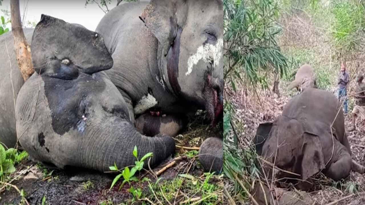 असम में बिजली गिरने से 18 हाथियों की दर्दनाक मौत! कारण संदेहास्पद?